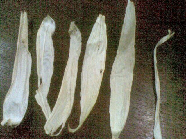 keringkan krobot jagung dari 2 buah jagung selama 2 hari
