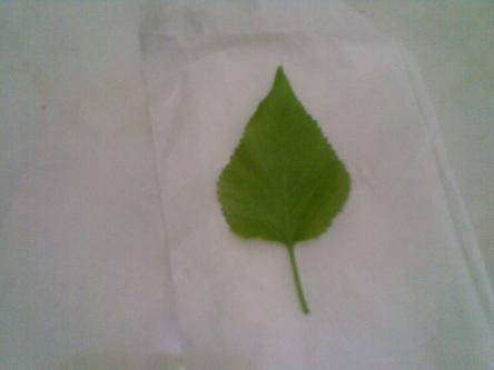 Bersihkan dgn tissue