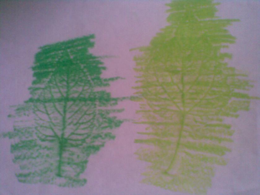 Dua tangkai daun bisa juga terlihat seperti dua buah pohon