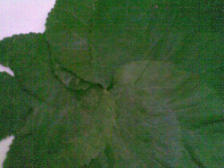 Tampak dekat daun susun melingkar di tengah
