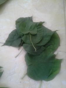 cari daun berbentuk hati, bisa daun apa aja deh
